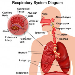 Organs of Respiration in Animals
