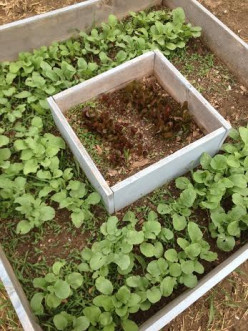 5 Easy Vegetables to Grow in Your Garden