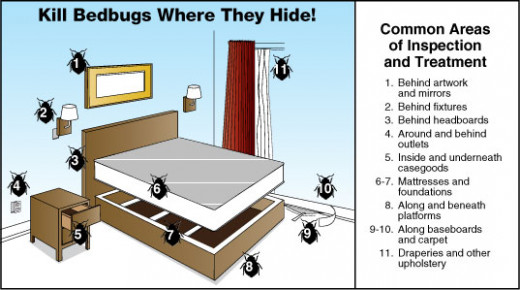 How To Get Rid Of Bed Bugs Symptoms Treatment Removal And Prevention Of Bed Bugs