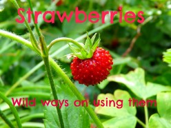What you can use the strawberry leaf for : tea and beauty products