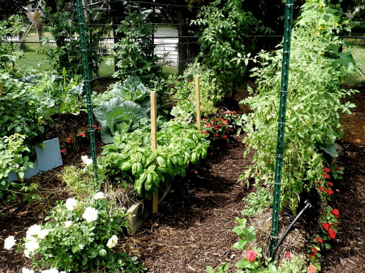 The Mittleider Method uses very narrow beds of custom soil, similar to the use of straw bales for garden beds