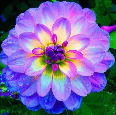 Flower power fore some