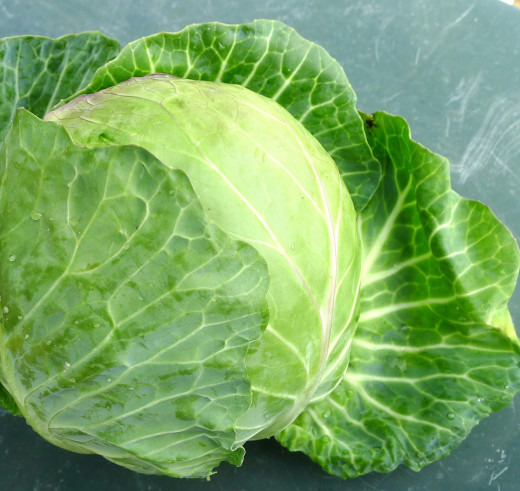 Cabbage and its leaves