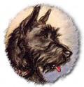 Training Your Scottish Terrier