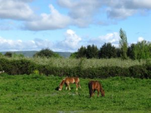 Horses grazing with bushes and trees, cloudy skies