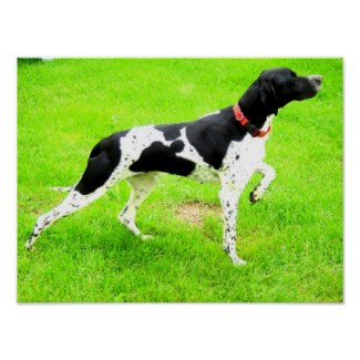 You can buy a poster of Molly from my online Zazzle store - it would make the perfect gift for anyone who loves pointers