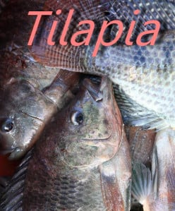 Tilapia: 5 Things You Didn't Know About This Fish