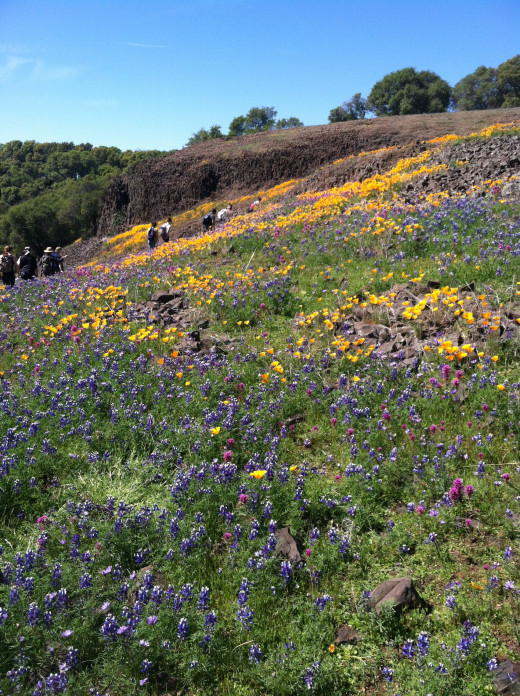 Wildflowers on Table Mountain. Botany field trip 2014