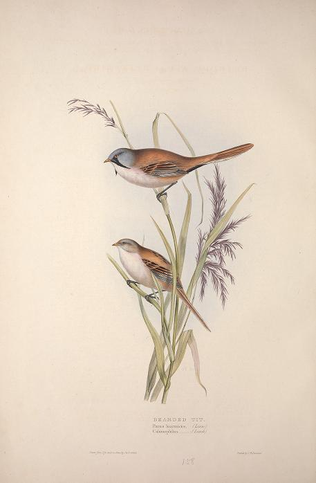 Gould birds of Europe1837