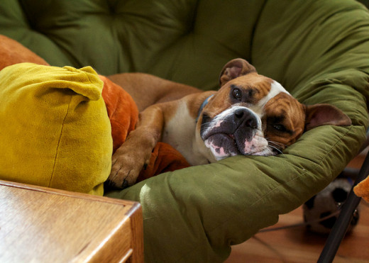 Make your dog as comfortable as possible when he's feeling under the weather.