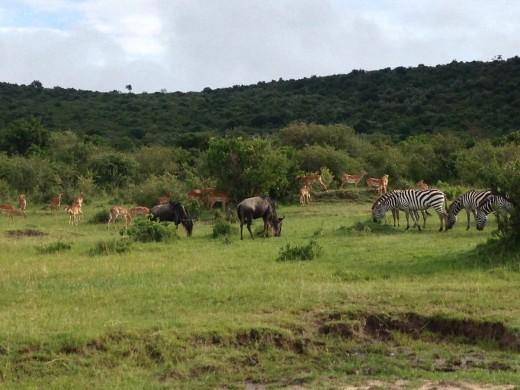 Animals grazing in Africa