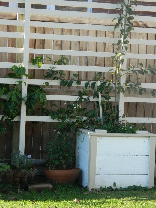 I have an area in the early stages and I call it my edible wall . I am training a Granny Smith, and passion fruit,cranberry, feijoa , and other berries  with herbs growing on and around the wall