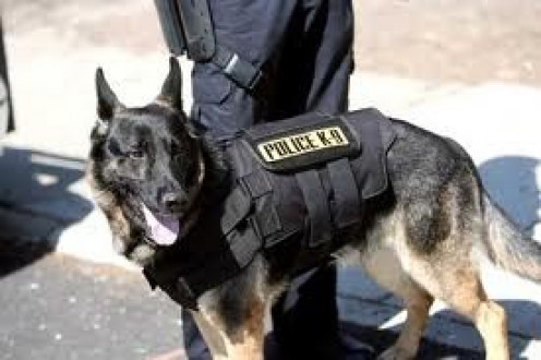 Police use dogs, especially German Shepherds to catch criminals and locate drugs.