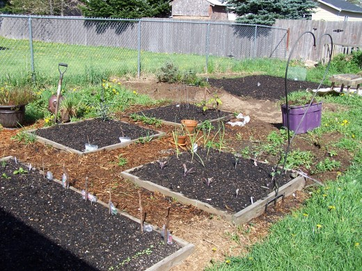 Growing our own food for a healthier lifestyle