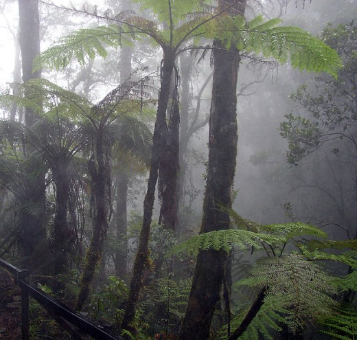 Tropical forests have high humidity