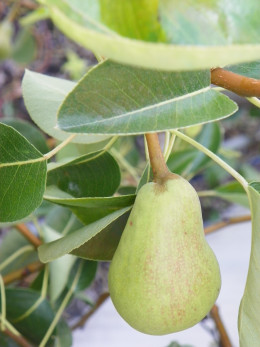 Growing fruit trees is not difficult and the rewards can be rich.