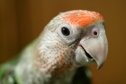 Oscar the Parrot Starred in Many Movies