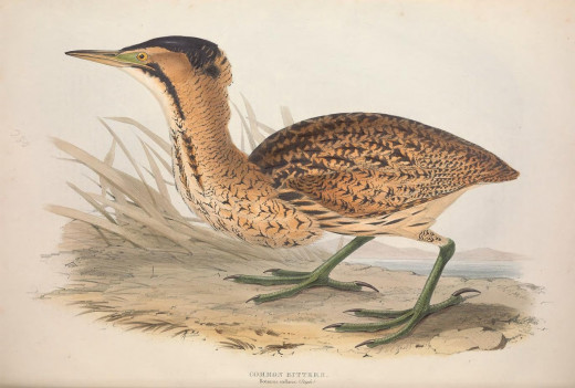 Gould  { birds of Europe}