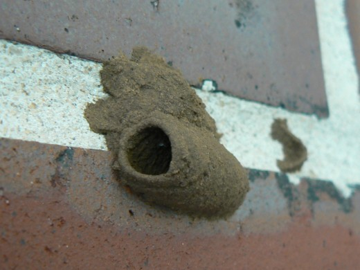Example of a Mud Dauber nest.
