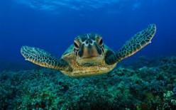 The Amazing Sea Turtle!