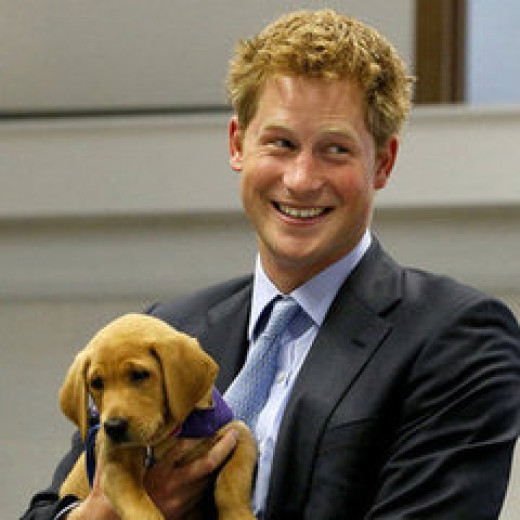 Prince Harry of England is a dog lover.