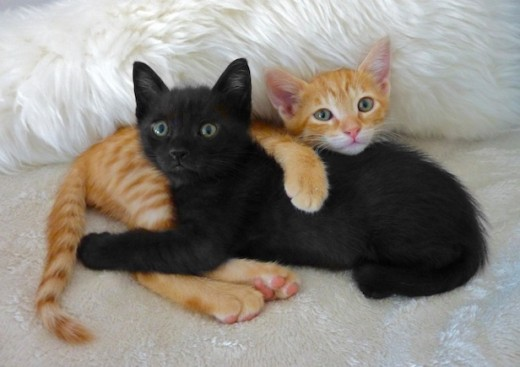 These kittens remind me of ones I had when I was a child.  They look exactly like them.  I especially love black cats.