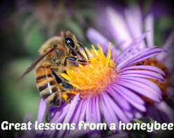 Efforts put in by the honeybee