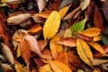Stop Environmental Pollution of Burning Autumn Leaves-Use Them Instead