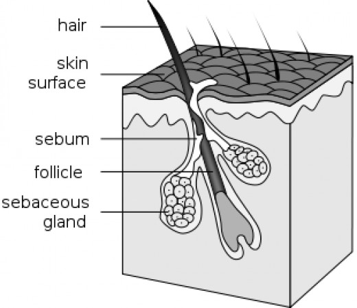 Internal Structure of Hair