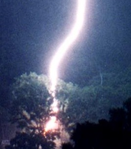 The tree had built up positive energy that caused the lightning to be attracted to it.