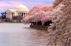 The Sakura Matsuri Japanese Street Festival at the Washington DC Cherry Blossom Festival