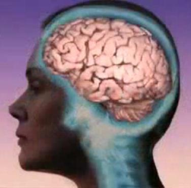 Human brain female side view