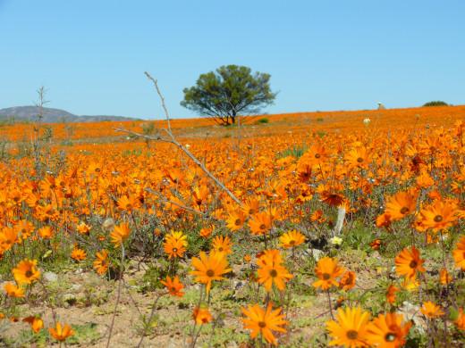 Namaqualand National Park