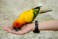 Food For Pet Birds - Types Of Seed
