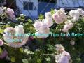 101 Easy Gardening Tips for A Better Garden:The Beginner Gardener's Handbook