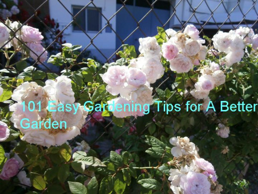 Gardening tips and advice for all gardeners.
