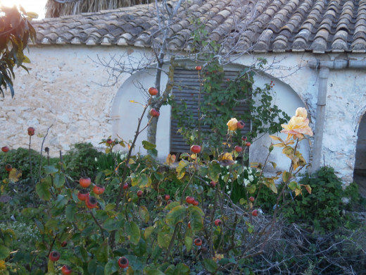 My garden in Spain in the winter