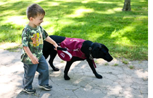 Fig.1. This graphic shows a young autistic child being guided back to his parents by his guide dog (Law Offices of Bonnie Z. Yates).