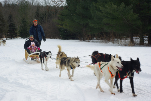 Dog sledding can be a great way to explore Algonquin Park in the winters.