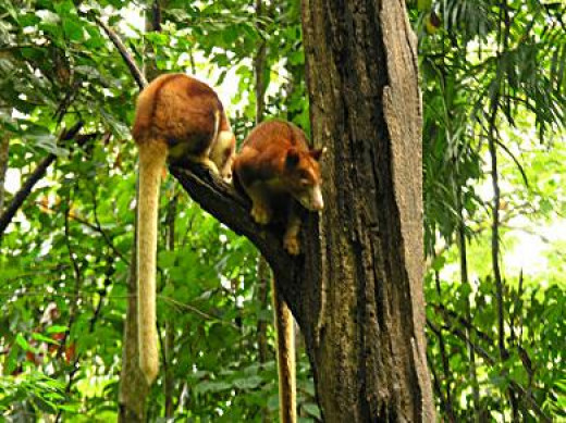 Rain forest habit in Lae