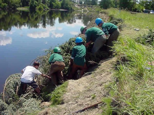 Ecotherapy often involves conservation or environmental projects.