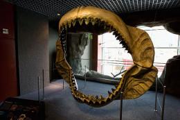 Megalodon jaws on display at the National Baltimore Aquarium