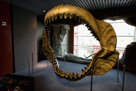 Megalodon jaws on display at the National Baltimore Aquarium