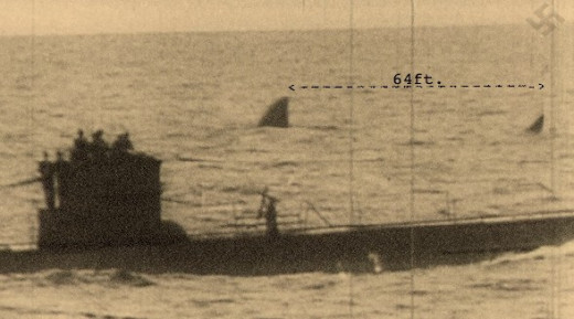 In the photo is a 60 foot plus shark behind the German U Boat during World War II. Could this Giant Great White be hunting off South Africa today. Does Megalodon still live.