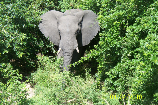 l Had a Close Shot During my Last Visit to Vic Falls.
