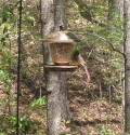The Best Way to Keep Squirrels Out of Your Bird Feeder