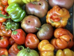 Home grown organic tomatoes have more nutrients and UV preventing lycopenes.