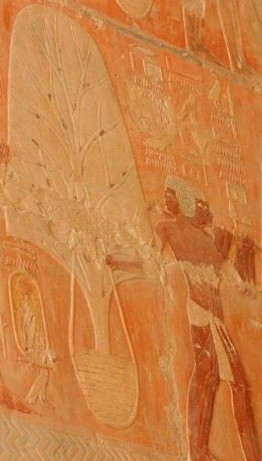 Relief Showing Trees Being Transported from Punt to Egypt