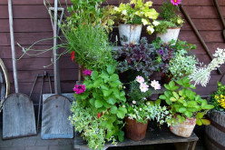 Container Gardening - Planters and Pots