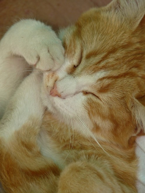 Cats sleep a lot and perhaps dream too